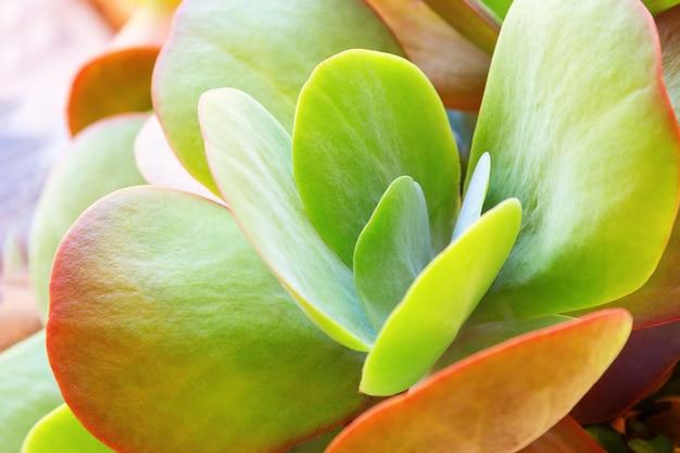 Één verse succulente cactus dichte omhooggaand bij zonnige dag