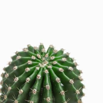 Één verse succulente die cactusclose-up op wit wordt geïsoleerd