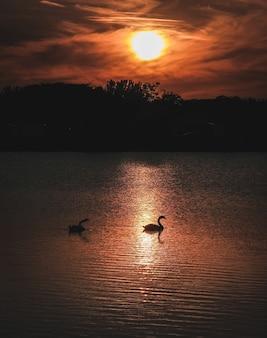Een verticale opname van twee ganzen in het water en een silhouet van bergen