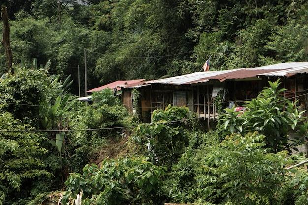 Een vervallen huis midden in de jungle. stilte en eenzaamheid. een toevluchtsoord voor sociale angst.