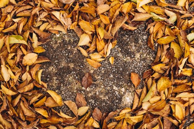 Een verzameling gevallen bladeren die een hart vormen