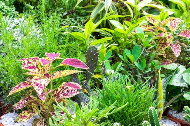 Een verzameling van verschillende soorten decoratieve bomen in de botanische tuin close-up