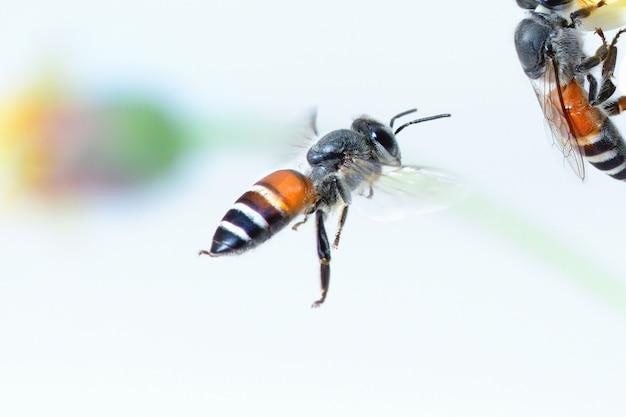 Een vliegende bij geïsoleerd op witte achtergrond