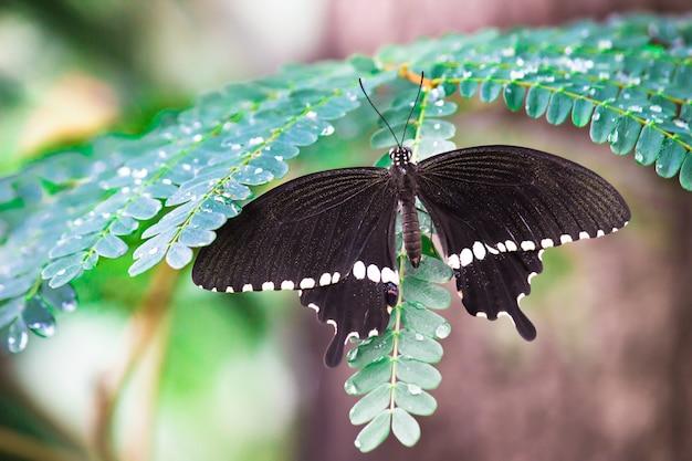 Een vlinder met wijd open vleugels rustend op de plant