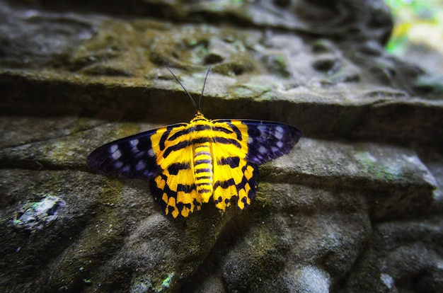 Een vlinder met zijn unieke kleur geel en zwart, zat op een sterke pilaar