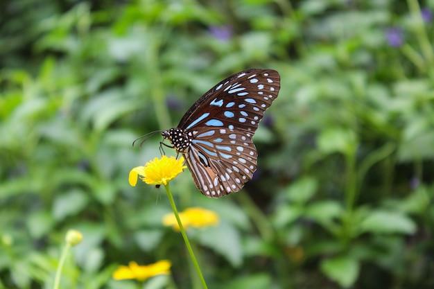 Een vlinder op de bloem