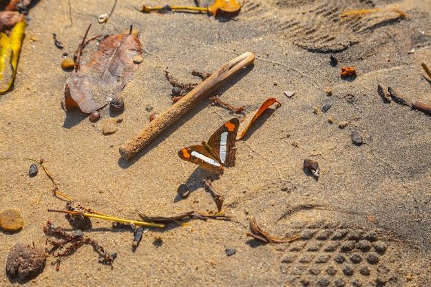 Een vlinder op het strand van puerto caribe in punta de sal in de caribische zee