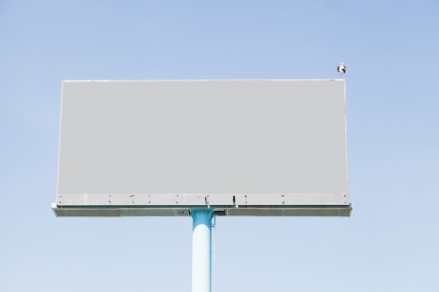 Een vogel die op leeg aanplakbord voor reclame tegen blauwe hemel neerstrijkt