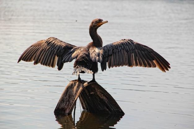 Een vogel die opdroogt op de madre de dios-rivier in puerto maldonado. peru