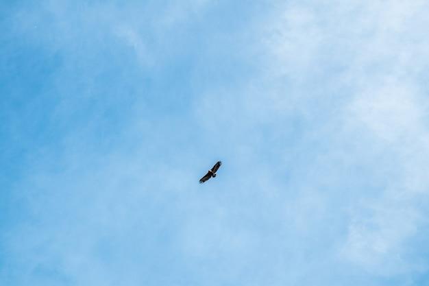 Een vogel spreidt zijn vleugels om naar de hemel te vliegen via dramatische cloudscape