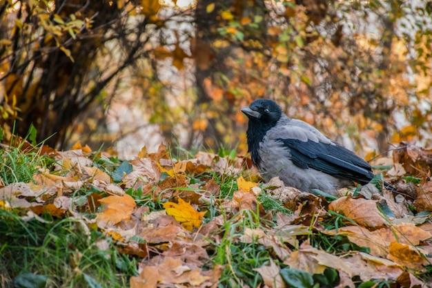 Een vogel van veertig staat temidden van gevallen bladeren