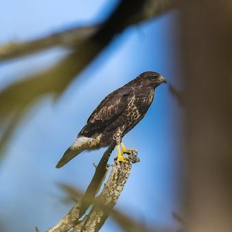 Een vogel zit op een boom