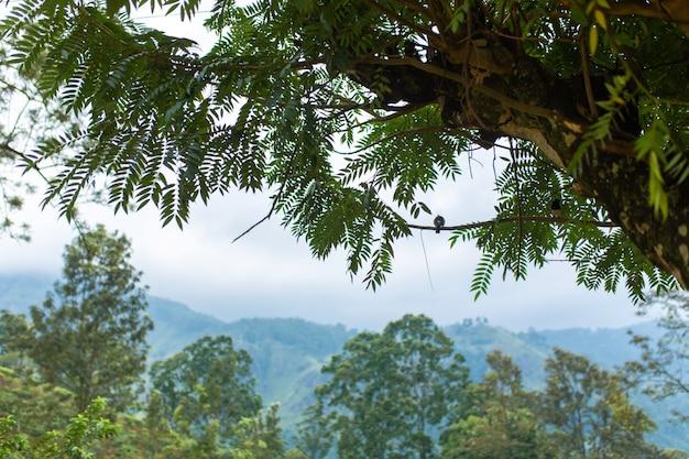 Een vogel zit op een boomtak. wild natuur