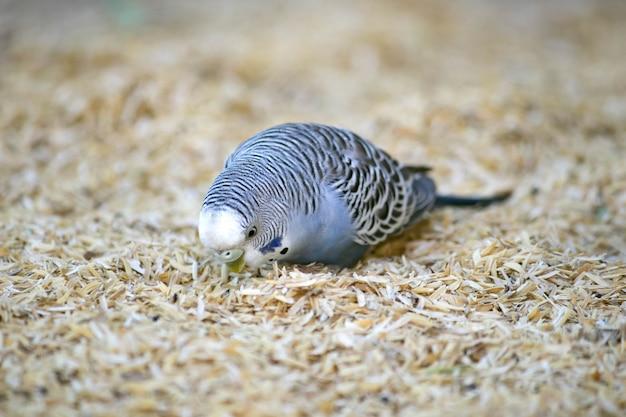 Een vogeltje is zo schattig
