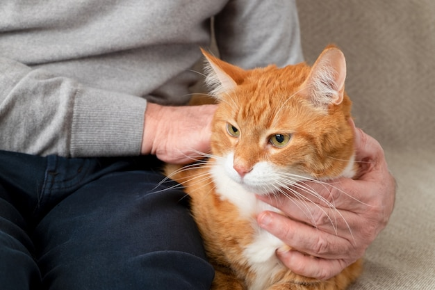 Een volwassen grote rode kat zit op de bank naast zijn eigenaar