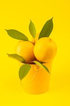 Een vooraanzichtmand met verse rijp citroenen met groene bladeren die op de gele achtergrondcitrusvruchtenkleur worden geïsoleerd