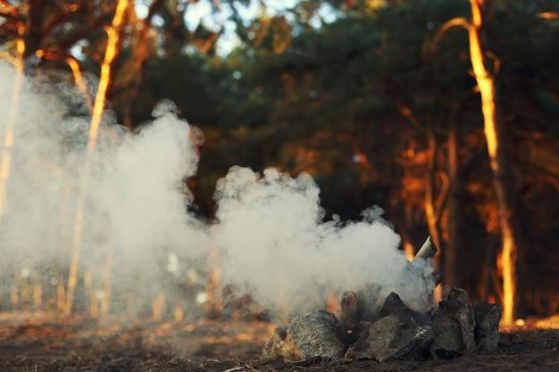 Een vreugdevuur in een dennenbos, rook zonder vuur.
