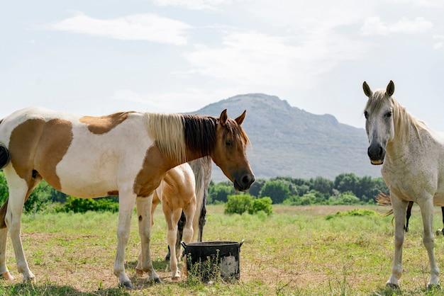 Een vrijheid en geluk, kudde paarden in de wilde natuur van de bergen