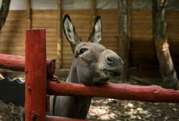 Een vrolijke ezel kijkt van achter een hek naar de dierentuin
