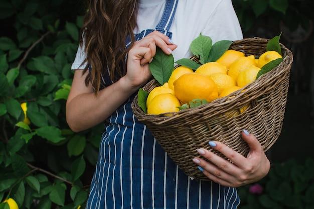 Een vrouw houdt een mand met rijpe citroenen in haar handen close-up het concept van landbouw