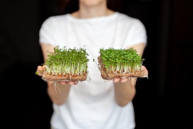 Een vrouw houdt thuis gekweekte microgroenten in haar handen. gezond en gezond eten. vegetarisch eten. microgroenten voor salades en maaltijden