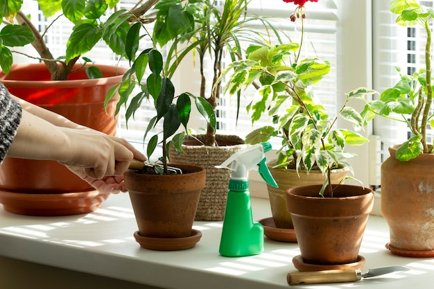 Een vrouw maakt de aarde los in bloempotten. kamerplanten op de vensterbank. selectieve aandacht.