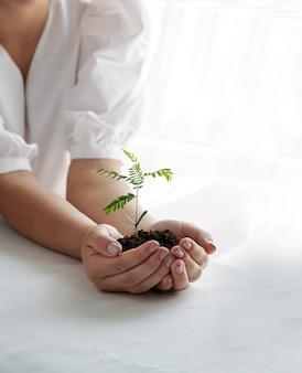 Een vrouw met een groene plant in de palm van haar hand. sluit omhoog hand houdend een jonge verse spruit. ondiepe scherptediepte met focus op zaailing.
