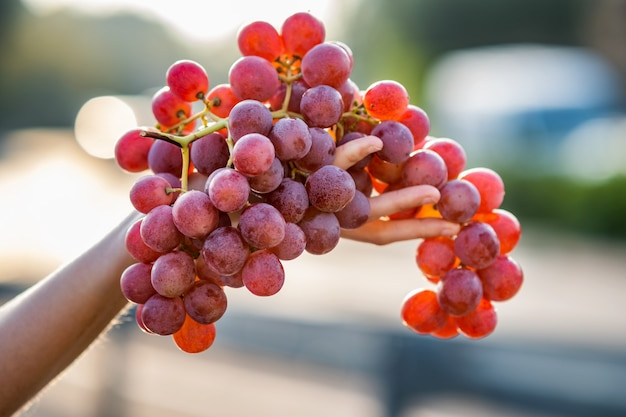 Een vrouw met grote cluster van rode sappige druiven in haar hand.