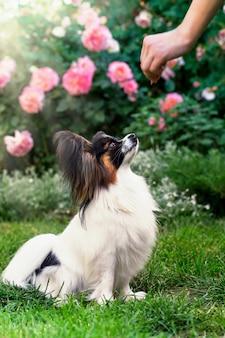 Een vrouw traint een huisdier in de tuin