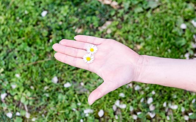 Een vrouwelijke hand die 2 madeliefjes onder vingers op een gras houdt