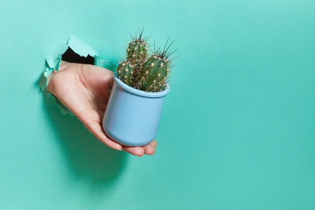 Een vrouwelijke hand uit een gat in een papier houdt een blauwe pot met cactus.