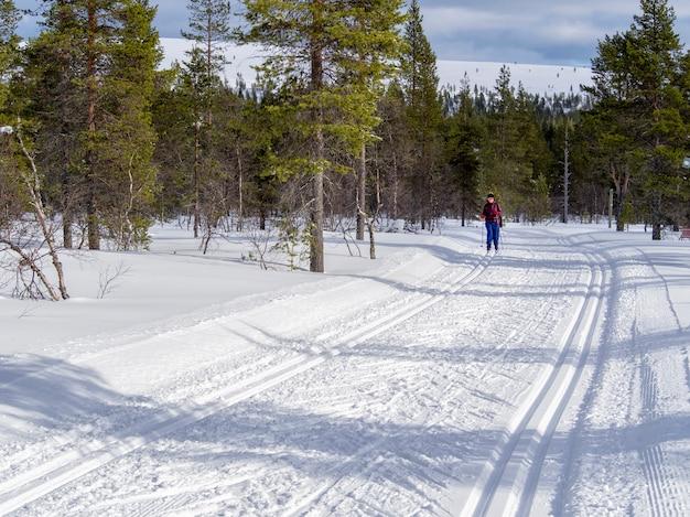 Een vrouwelijke skiër in het hele land in het bos van finland