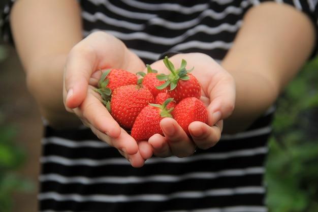 Een vrouwtje met verse aardbeien op de boerderij