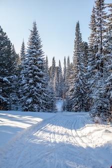 Een wandeling door het winterbos. sneeuwbomen en een langlaufloipe. mooie en ongebruikelijke wegen en bospaden. prachtig winterlandschap.