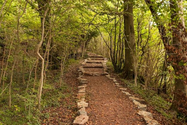 Een wandeling in het bos - wye-vallei
