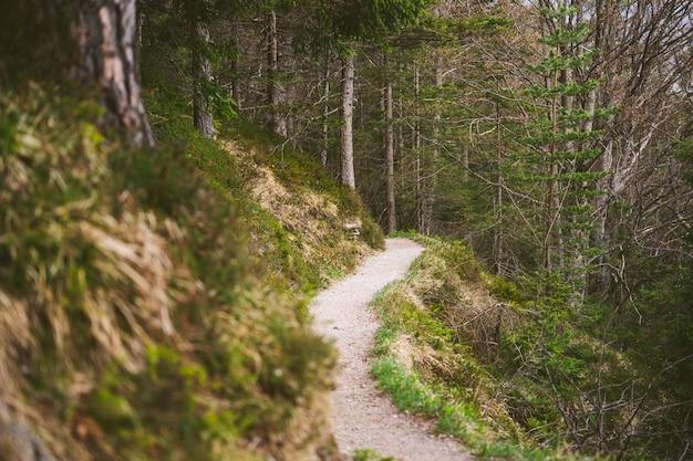 Een wandelpad in de beierse alpen in de lente