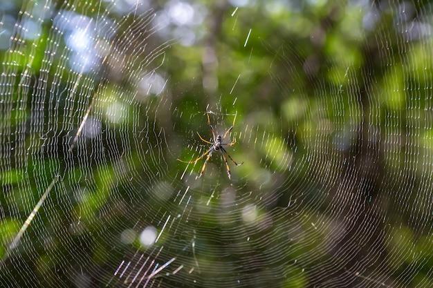 Een web met een spin, met een wazige groene achtergrond