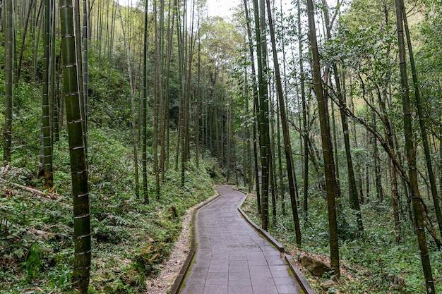 Een weg die leidt naar de diepten van het bos, met bomen en rotsen aan beide kanten