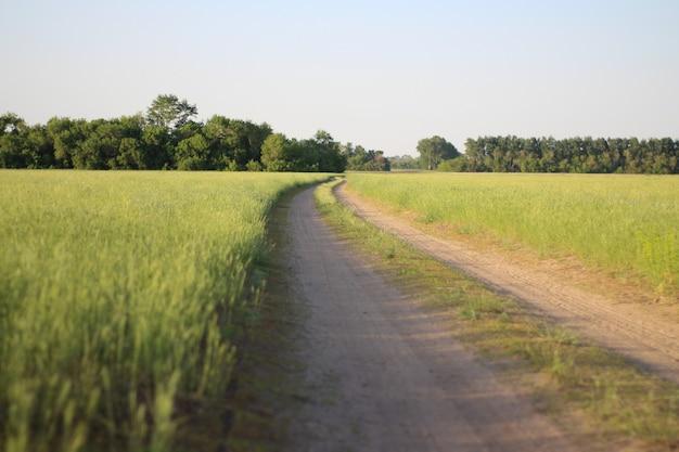 Een weg in een groen veld op het platteland van siberië.