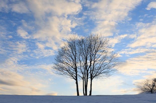 Een winterlandschap met een geïsoleerde boom boven een blauwe hemel. italiaanse alpen