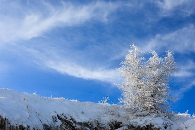Een winterlandschap met een geïsoleerde boom boven een blauwe hemel