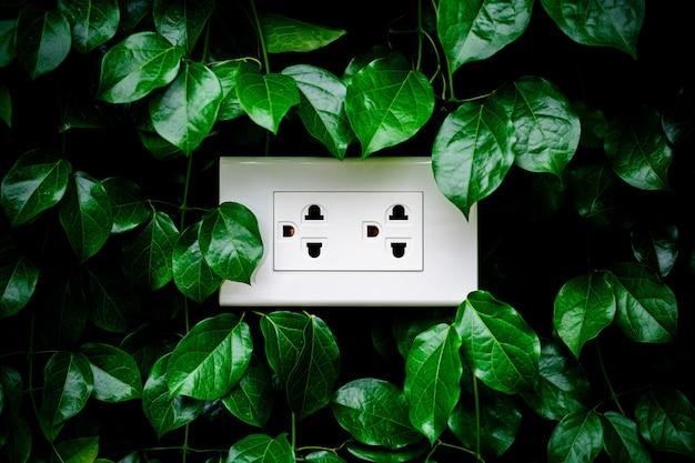 Een wit huisstopcontact op een bladerenmuur.
