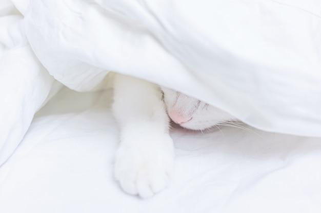 Een witte kat ligt op een wit laken. alleen de neus en poot zijn zichtbaar. het concept van huisdieren, comfort, zorg voor dieren, katten in huis houden. lichtbeeld, minimalisme, copyspace.