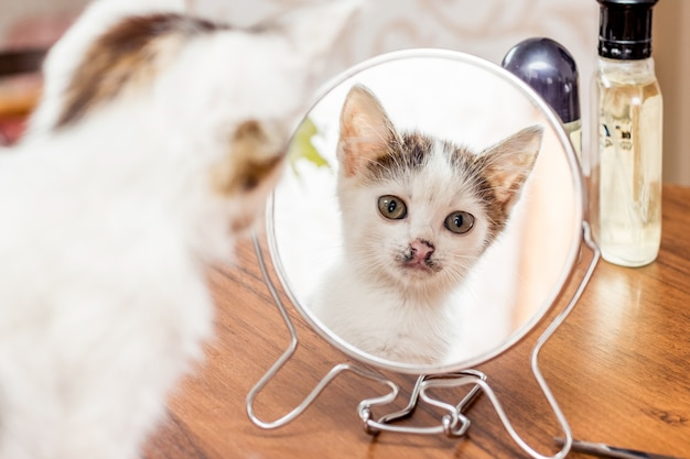 Een witte kitten kijkt in de spiegel in de ochtend na een droom
