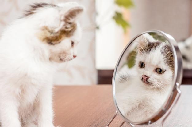 Een witte kitten kijkt in de spiegel op eigen schoonheid