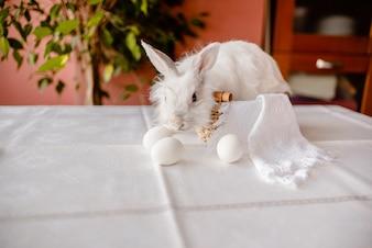 Een witte konijnzitting met een servet en paaseieren. Paaskaart voor de feestdagen