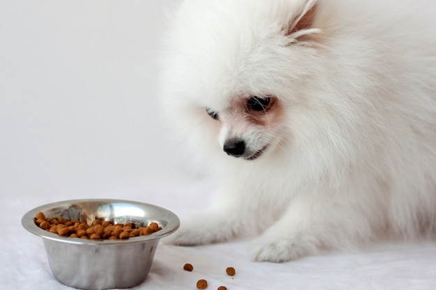 Een witte pluizige pommerse puppy zit in de buurt van een ijzeren kom met droog voedsel en eet het voedsel met eetlust.