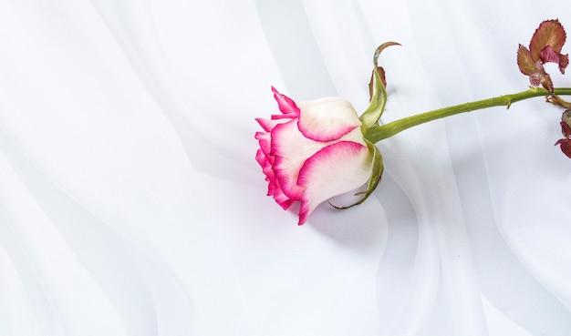 Een witte roos met roze randen op een witte gestructureerde achtergrond.