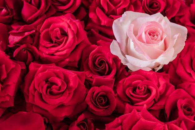 Een zachtroze roos in een groot boeket felrode rozen.