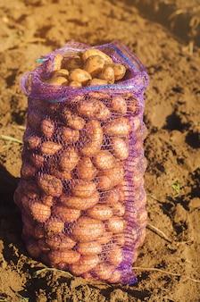 Een zak met vers geplukte aardappelen in het veld.